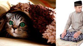 [VIDEO] Apabila bulu kucing melekat di tempat solat, kita perlu...