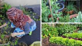 10 sayuran, bahan masakan mudah ditanam, hasilnya sangat berguna