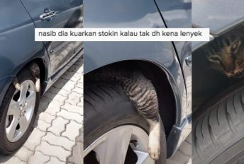 kucing dalam tayar kereta