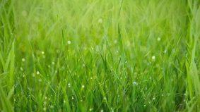 PKP: Tip potong rumput sendiri di rumah