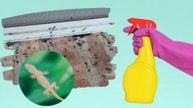 Gunakan 3 bahan saja untuk atasi masalah najis cicak!
