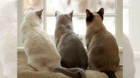 Kucing dibunuh kejam: Ini cara simpan, bungkus bangkai untuk dijadikan bukti