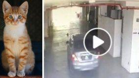 [VIDEO] Lagi kekejaman pada si meow... kali ini kucing sengaja digilis dengan tayar