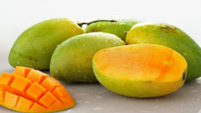 Tak rugi bagi siapa yang suka makan buah mangga!