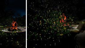 Kelip-kelip dan kunang-kunang, bidang ekopelancongan yang berpotensi diterokai