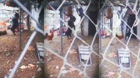 [VIDEO] Gaya pelik kambing hitam berjalan buat ramai merinding, padanlah pemilik mahu jual cepat-cepat