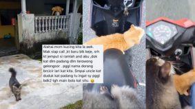 [VIDEO] Berjalan tak ingat jalan balik rumah, pemilik kucing ini terpaksa jemput 'mereka' pulang