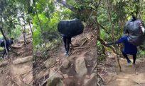 [VIDEO] Pemuda batal niat hiking, pikul sampah 10kg bersihkan laluan pendakian